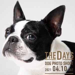 SHONAN CRYSTAL HOTEL Dog Photo shoot Produced   by THE DAYS